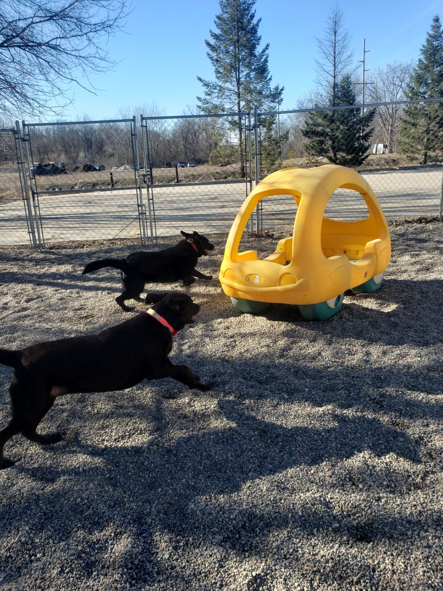 Greta and Roxy run across the yard