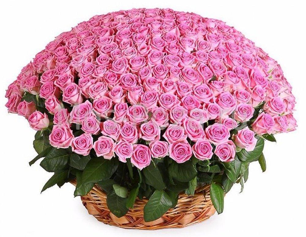 Самые красивые цветы мира открытки, днем