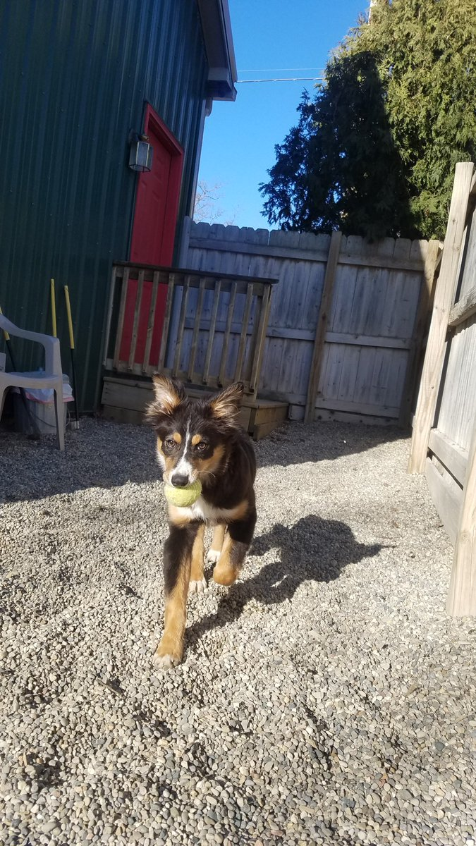 Gracie races back with her ball!