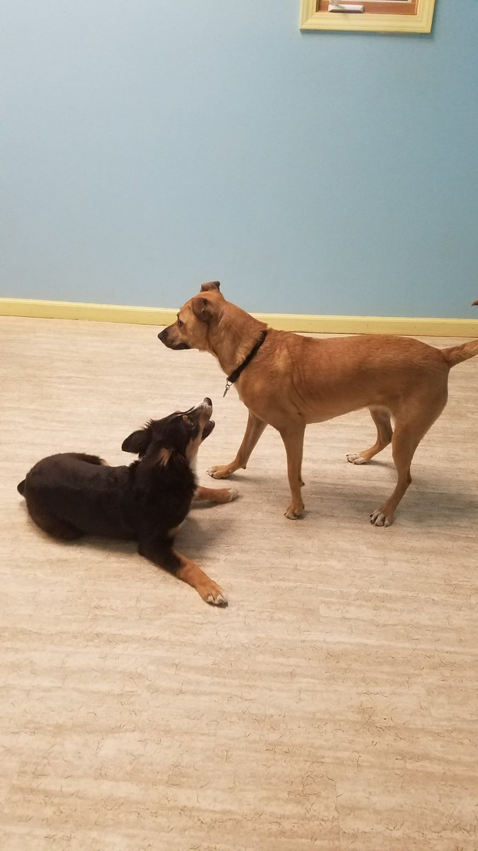 """Gracie says to Zoe J. """"Let's play!""""."""