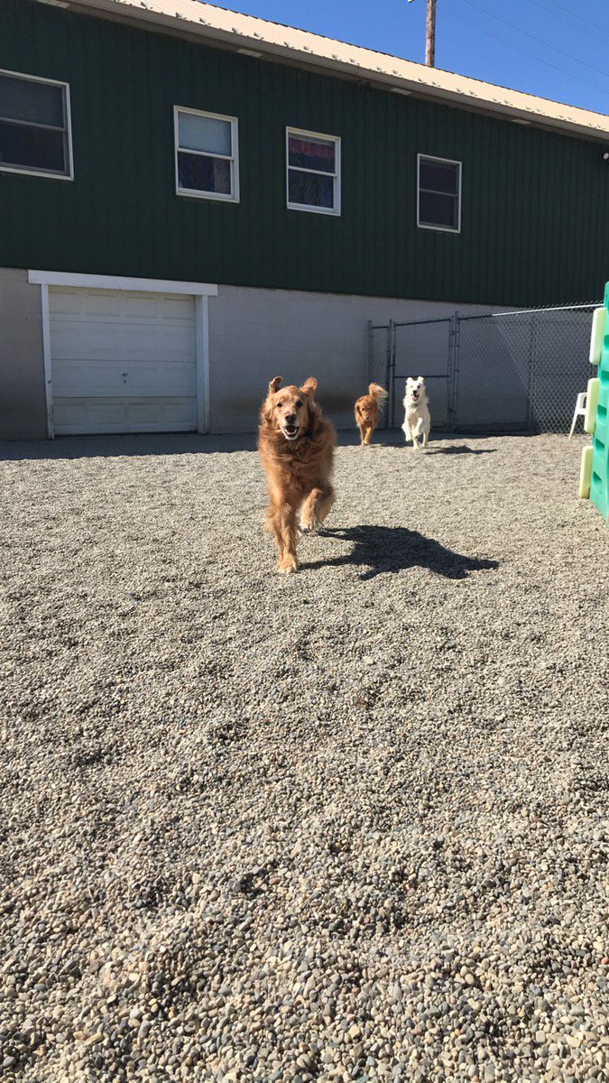 Rosie, Breslin, and Maggie race across the yard