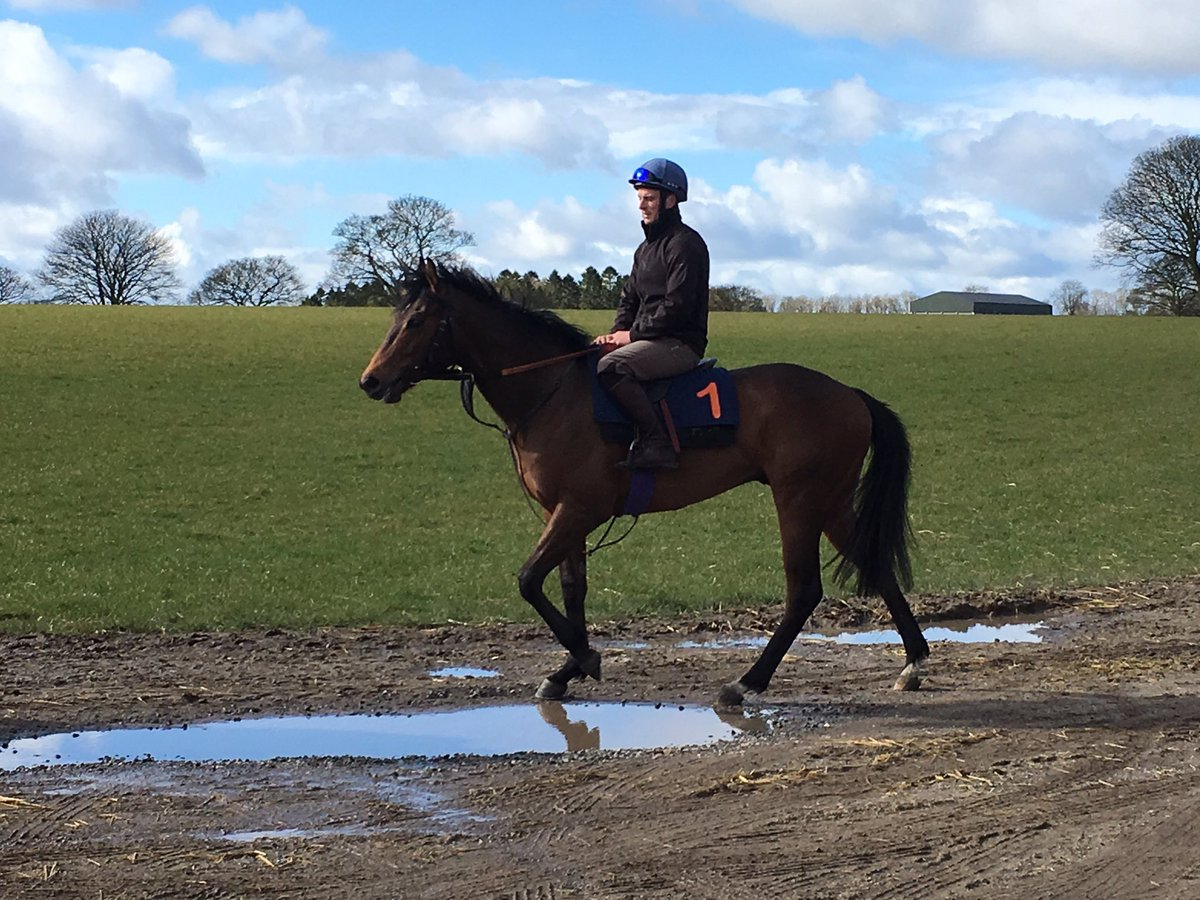 Entered to run @DoncasterRaces on Saturday SHOW ME SHOW ME in the 5 furlongs 2-year-old Brocklesby. Trained by @RichardFahey