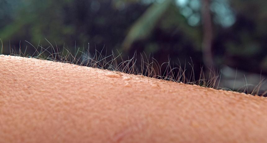 <85> 몇몇 사람들은 자발적으로 자신의 피부에 닭살을 돋게 만들수 있다고 합니다! 이것을 영어로 Voluntary piloerection 이라고 부른대요!