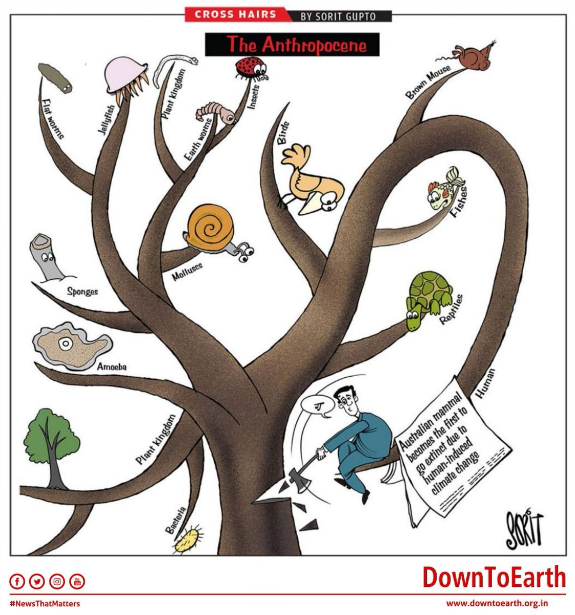 Down To Earth On Twitter Cartoon The Anthropocene Tree Of Life Climatechange Wildlife Biodiversity A & a scientific resources sdn bhd, trees, green leafed tree png clipart. climatechange wildlife biodiversity