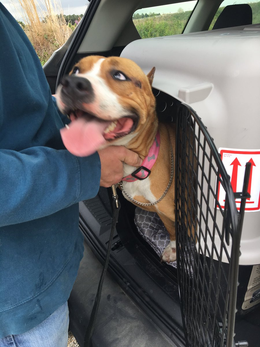 'Success!' Show dog reunites with owner after vanishing at airport