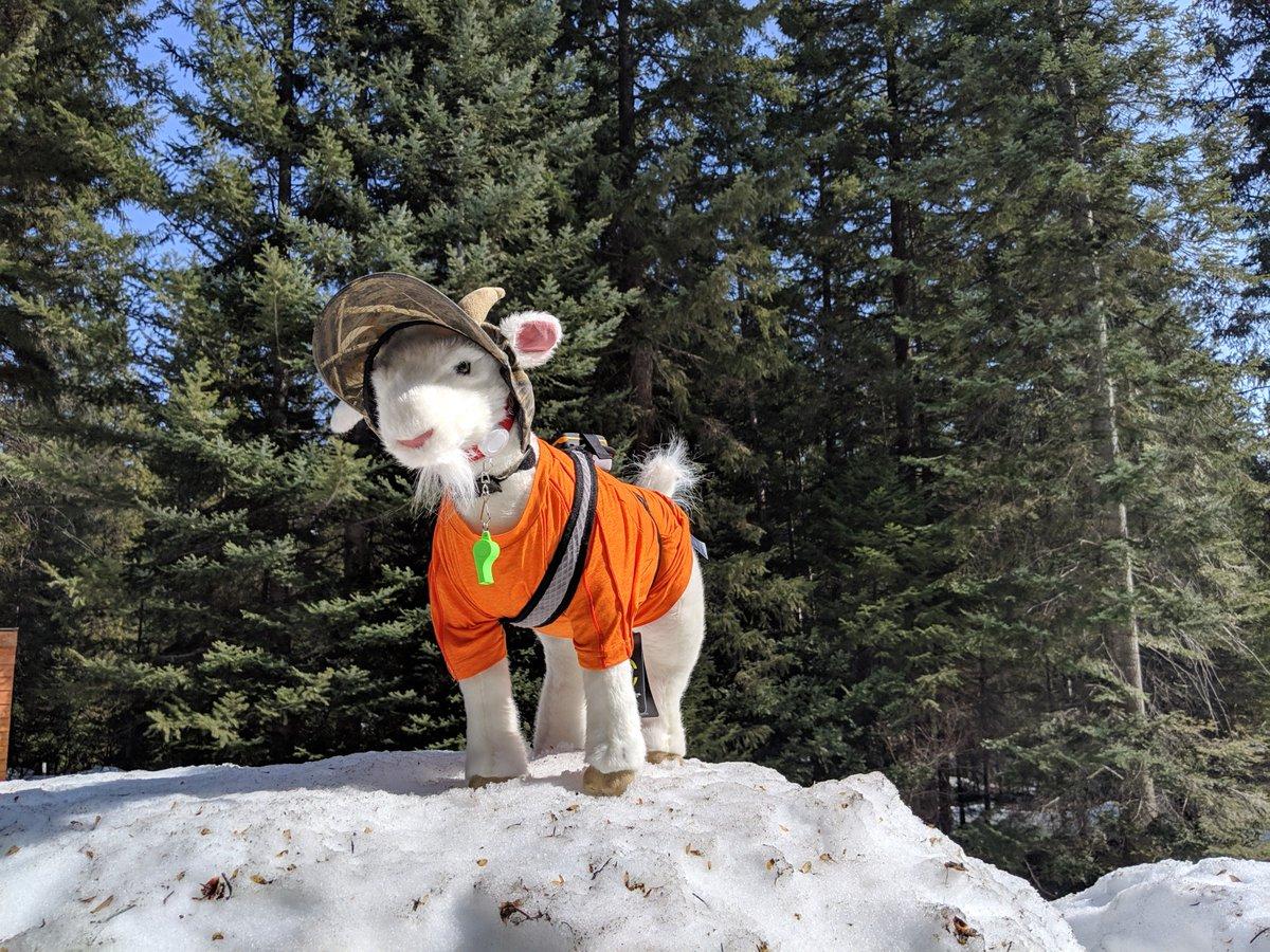 Good To Go Washington >> Washington State Dot On Twitter Mazama The Avalanche Rescue Goat