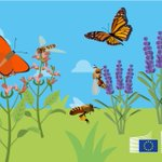 Image for the Tweet beginning: #EUPollinators are not all black
