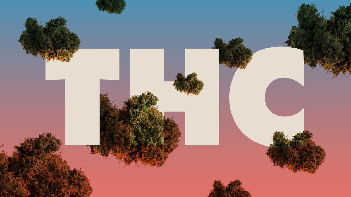 最新研究显示癌症患者更喜欢选用含有高浓度四氢大麻酚(THC)的大麻品种