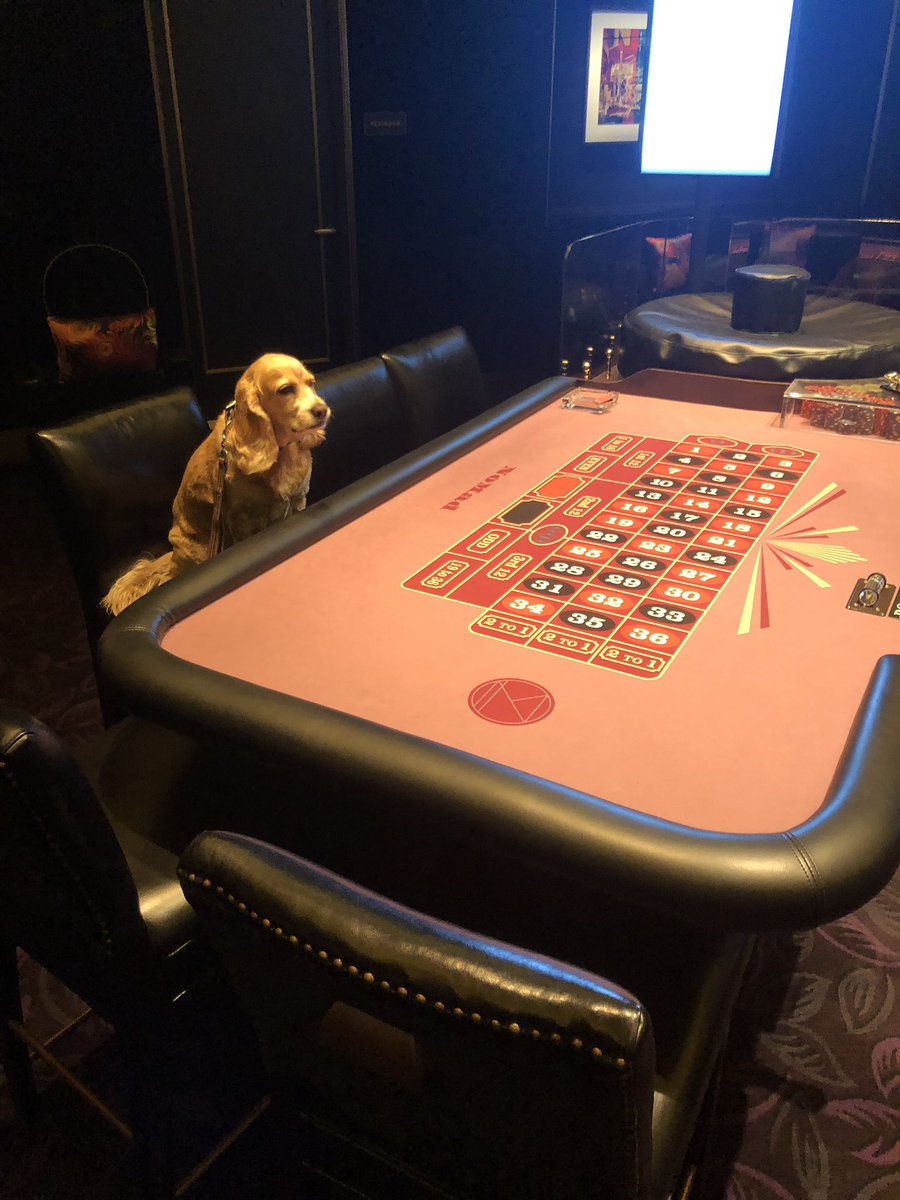 Ok this isn't fair the casino won't give Stella any action!! Come on ParkMGM take her bets?!
