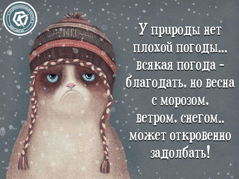 У погоды нет плохой погоды картинки анимация, картинки про грибы
