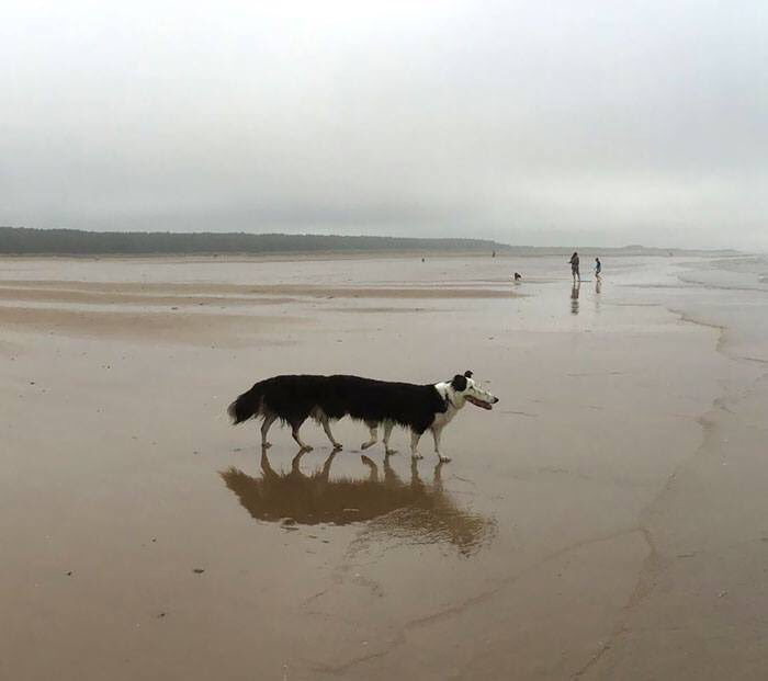 22 Dog Panorama Fails That Are Waaaaay Funnier Than They Should Be