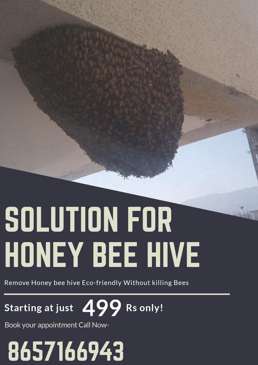 honeybeehive hashtag on Twitter