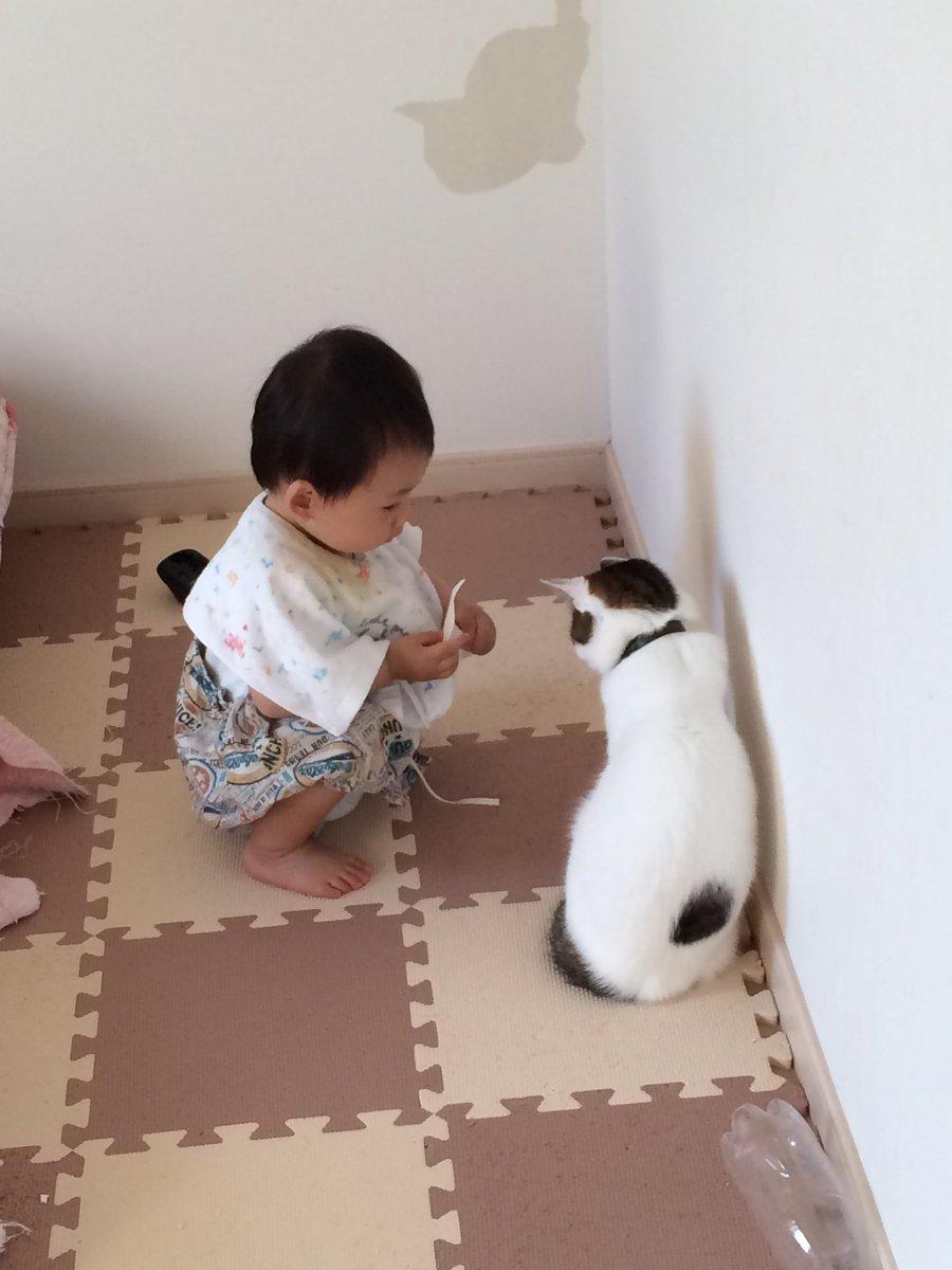 深水さんちのねこ On Twitter 育児衝撃画像 猫と共謀した長男に壁紙