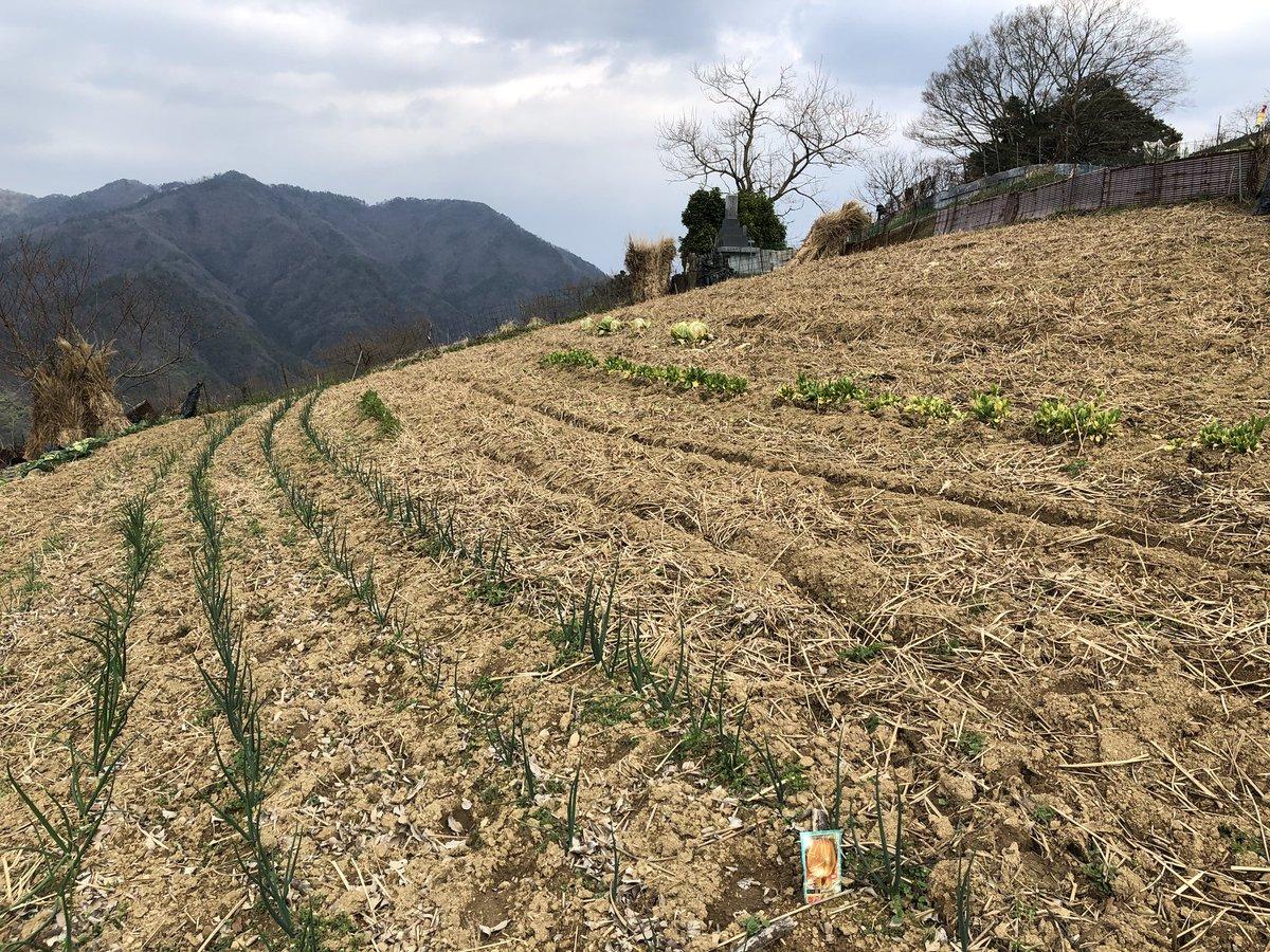 """Hajime Ishikawa Twitterissä: """"段畑にせず、傾斜地のまま畑にされて ..."""