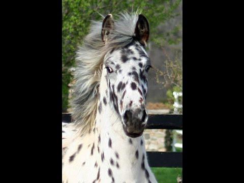 Top Horse Finder (@finder_top) | Twitter
