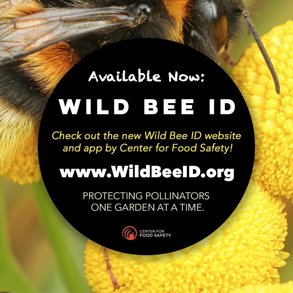 Wildflower Association of Michigan (@WildflowersMich)   Twitter