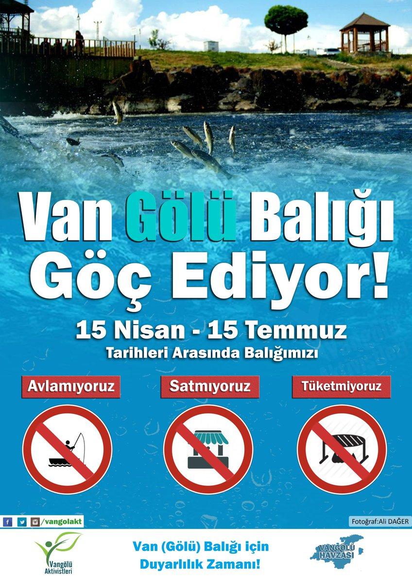 Van ve Bitlis illerinin, Van Gölü' den sonra  En büyük ortak değeri olan #VangölüBalığı Göç Ediyor. Göç zamanında Balığımızı AVLAMIYORUZ! SATMIYORUZ! TÜKETMİYORUZ! @vangolakt @VanValilik @BitlisValiligi @vantsokurumsal @Tatvantso @BitlisSehri @van_guzel @NevzatAydn_VDTO