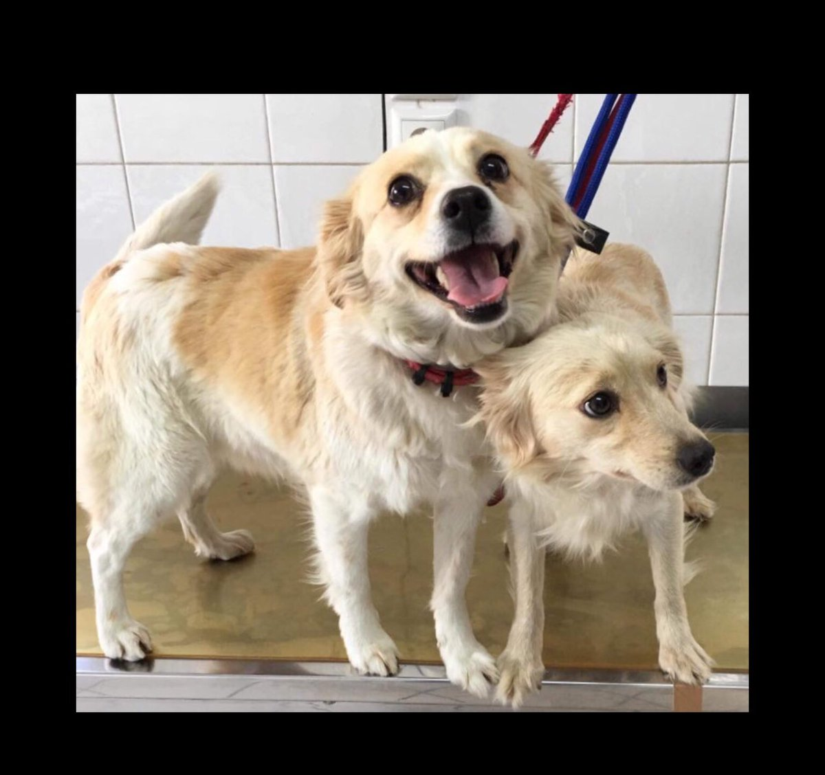 Beautiful, loving Lila & Kelly-with their puppies- were dumped like rubbish at the side of a road in Zante. We'd be #grateful for your help to find them a home with people who deserve them in #uk #Germany #NL💕  #AdoptDontBuy #rescuedogs #alldogsmatter #dogsarelove #AdoptMe #Dog