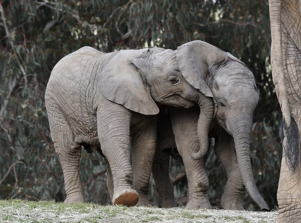 Name a better pair for #NationalSiblingsDay...we&#39;ll wait. #PachydermPair  Shelley Weiss <br>http://pic.twitter.com/KUAYU7ugHz
