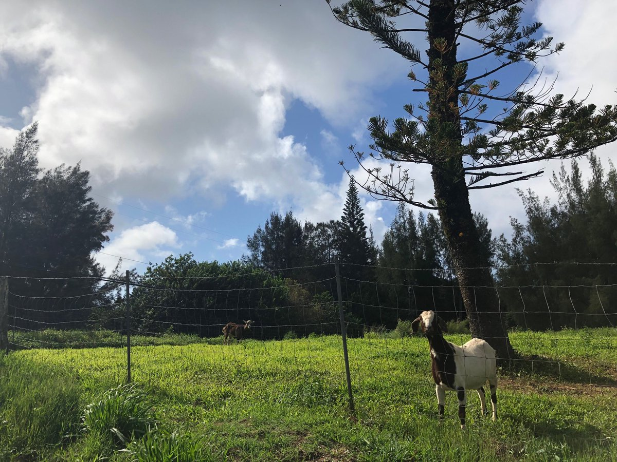 test Twitter Media - Breezy beautiful day in Haiku. #cmweather #Maui #Haiku #goats https://t.co/G5Iyq8b5PA