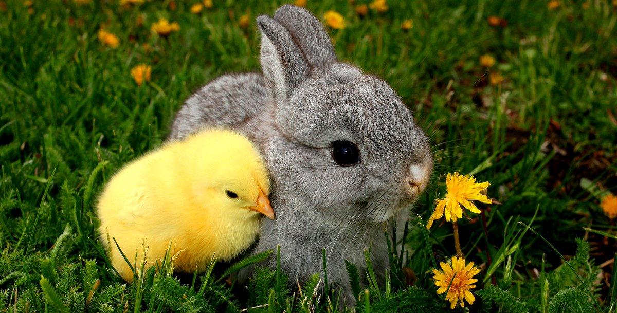 Открытки, открытки птенчики зайчик
