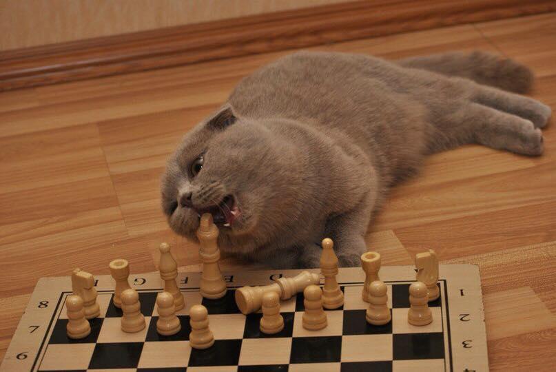Картинки шахмат прикольные, открыток новым