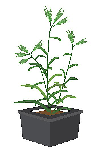 La próxima vez que necesites imágenes e ilustraciones de plantas puedes buscar en https://figshare.com/authors/Plant_Illustrations/3773596…  Puedes guardar allí las que tú generes para que las reutilicen y citen: https://doi.org/10.6084/m9.figshare.4688728.v1…  @figshare @ErinSparksPhD @guillaumelobet @LarryMattYork @Frederic_Bouche