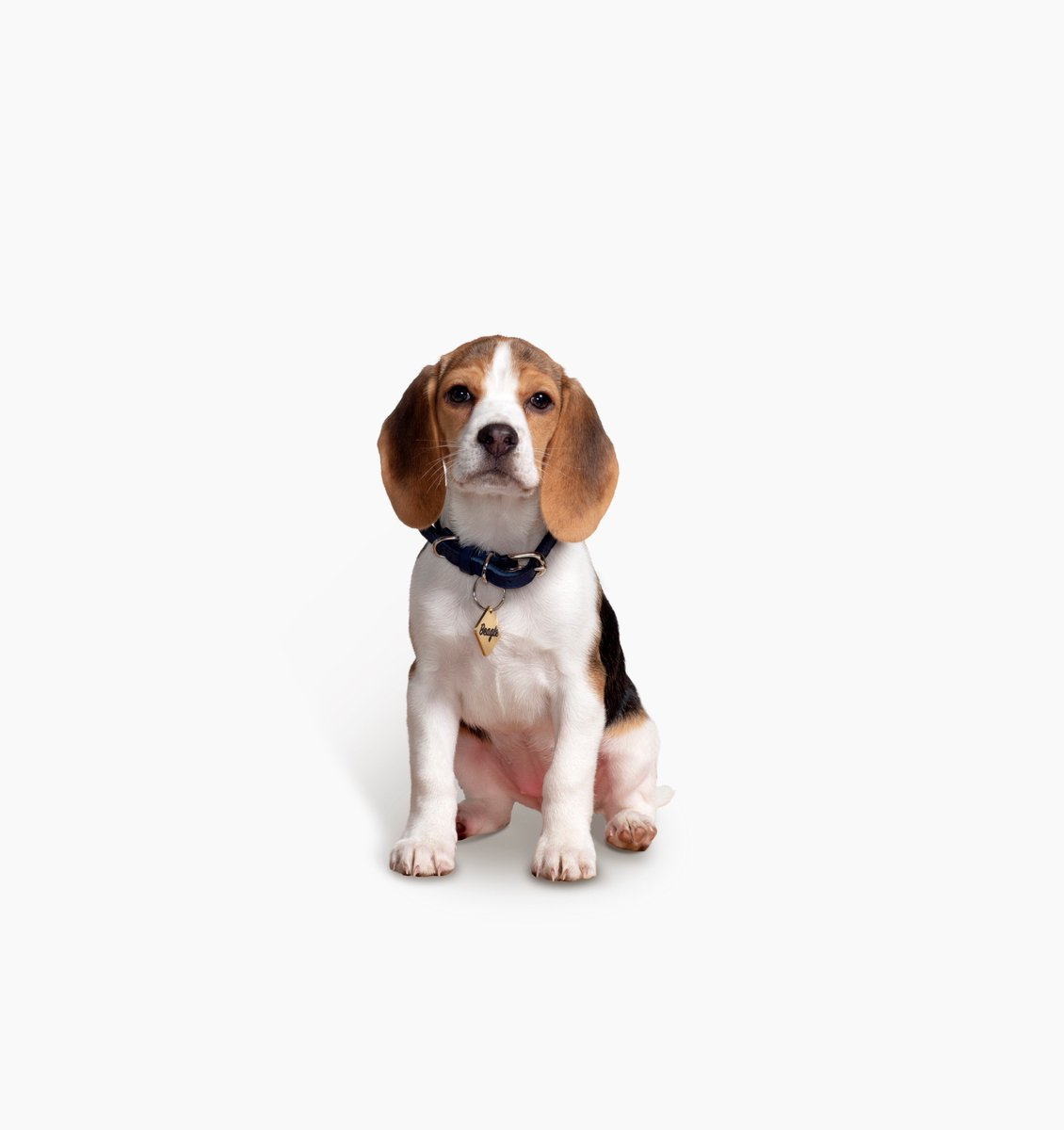 Beagle Life Insurance >> Beagle Street On Twitter Beagle Wants To Wish You A Happy