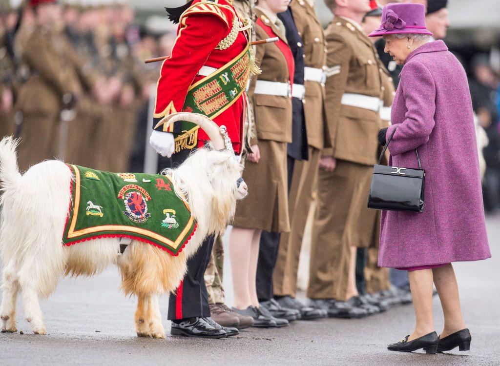 هوميروس Sur Twitter ويليام تيس الملكة اليزابيث الثانية