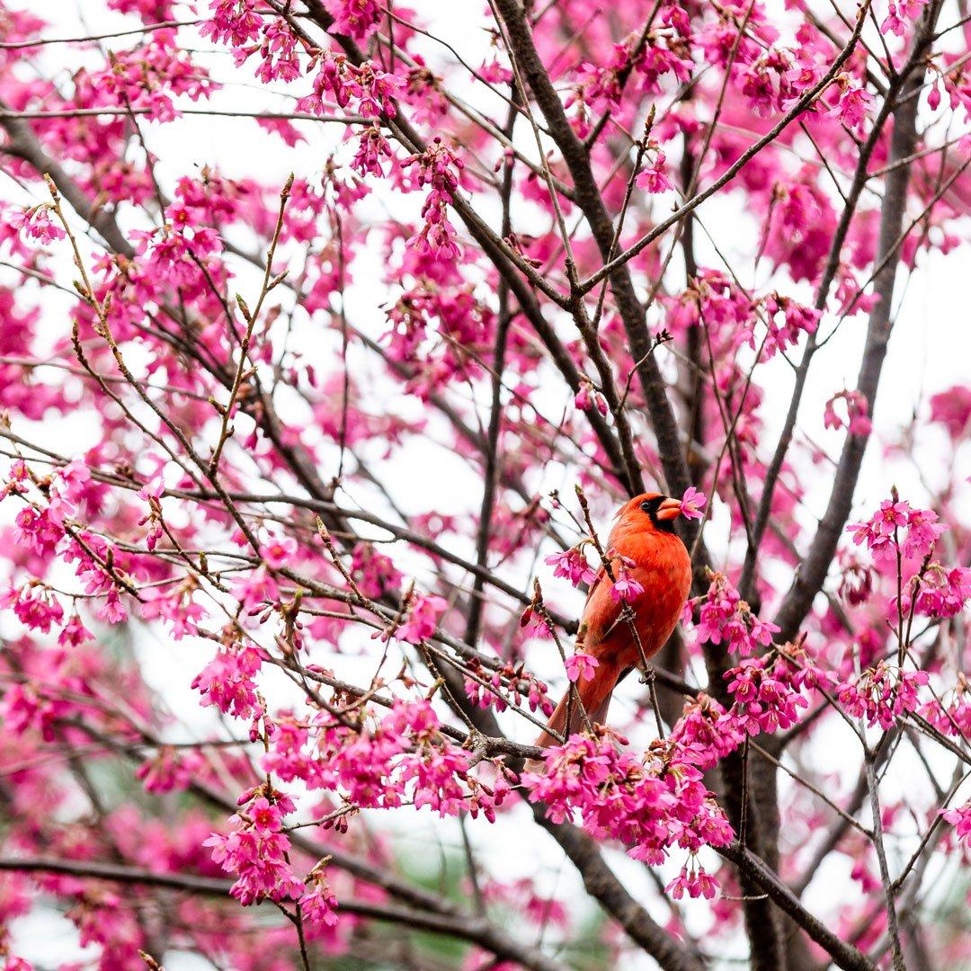 New York Botanical Garden Nybg Twitter