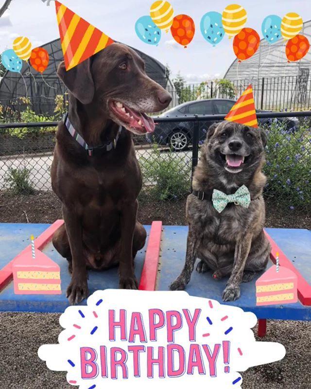 Dog Cake Will Be Served At 5pm Birthday Dogbirthday Birthdaydog Dogparty Dogpawty Fluffy Puppylove Pdx Pdxevents Portland Hiphound