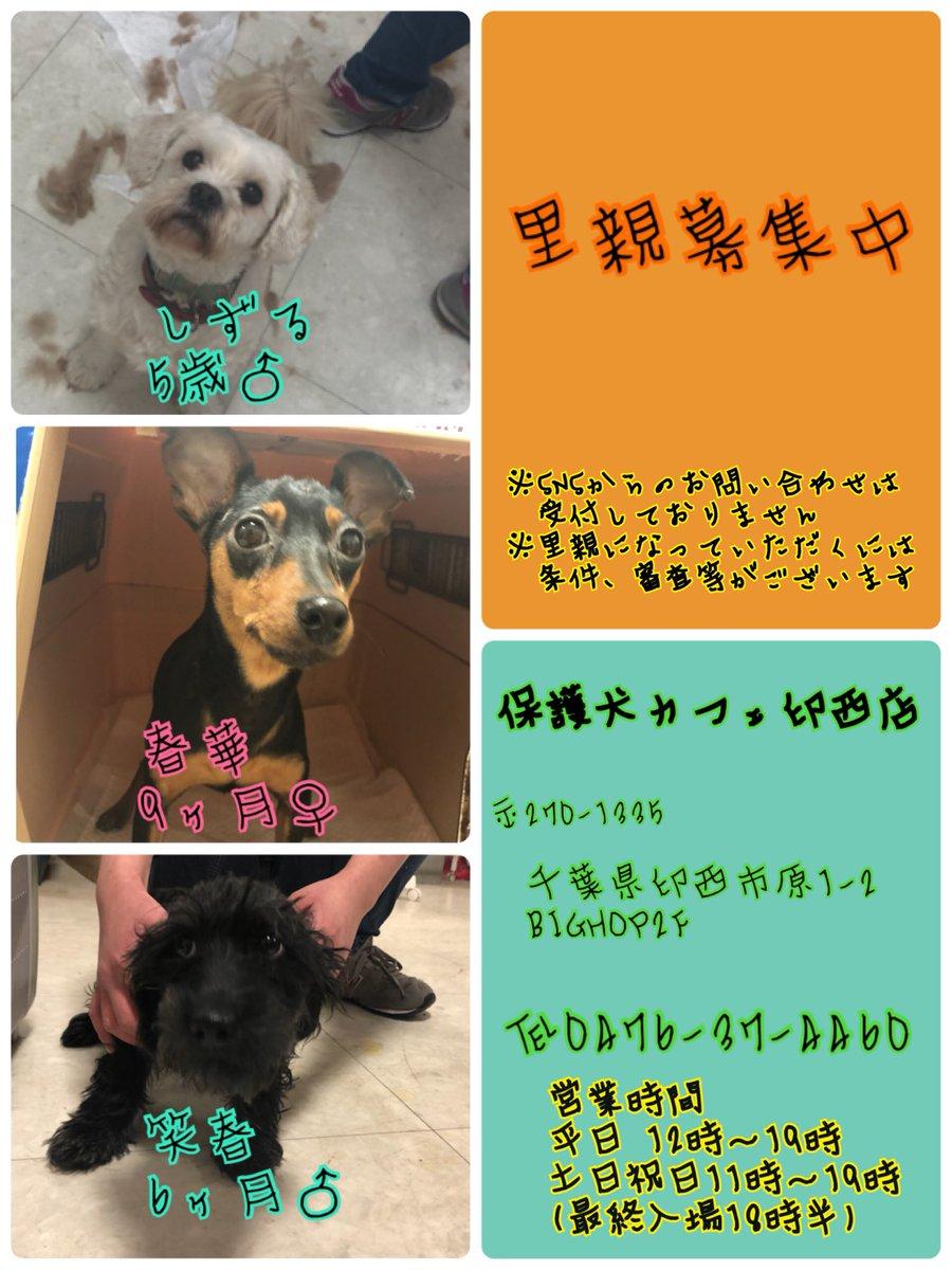 千葉 カフェ 保護 犬