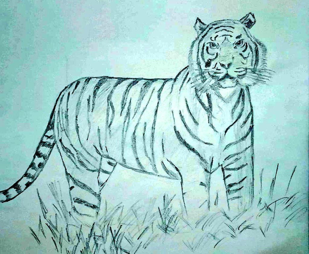 Muthu On Twitter Save Tigers Tiger Savetigers Racingxtinction Wwf Sms Arts Wildlife Drawing Racingxtinction