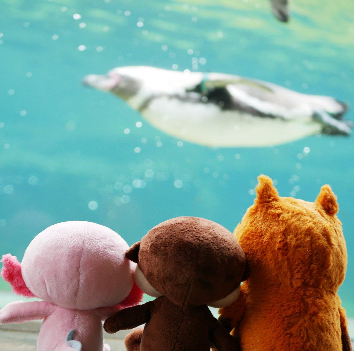 泳ぐの上手〜!🐧🏊 ♀ みずべくらぶ くらぶ