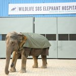 Image for the Tweet beginning: Wildlife SOS opens India's first