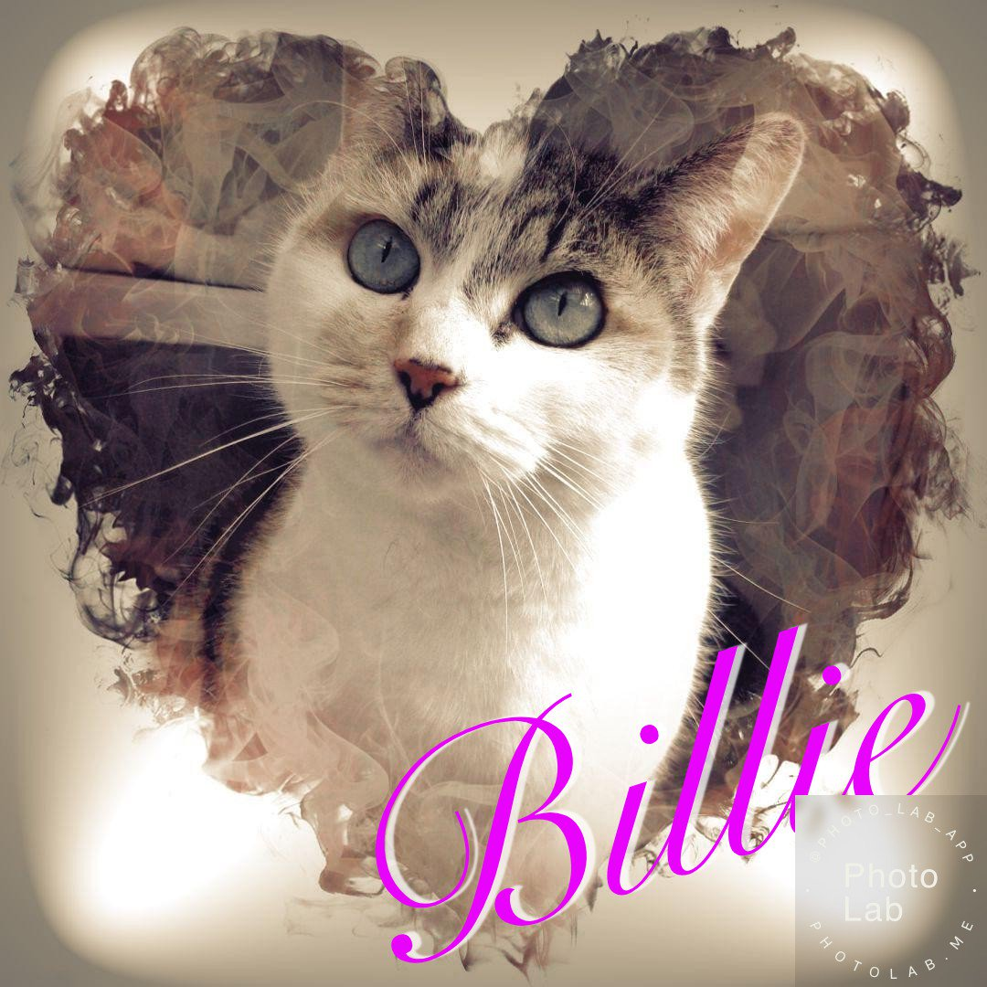 Beautiful Billie is waiting for visitors - could that be you?  #AdoptDontShop #sleaford #lincolnshire #cats #CatsOfTwitter #calico #calicocat #tortie #tortiseshell #Adopt https://www.facebook.com/156773954460723/posts/1292699770868130/…pic.twitter.com/96CDz1jrm8