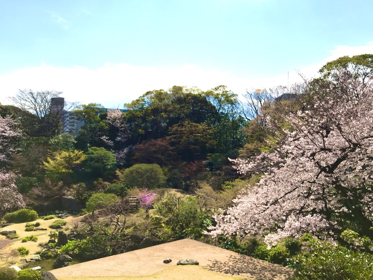 Room with a view.   国際文化会館では桜が満開です。