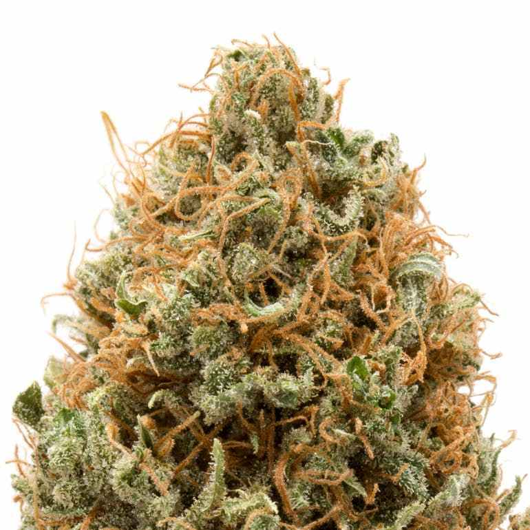 DURBAN POISON ONLINE  Durban Poison, the Sativa hybrid with between 17% and 25% of THC (tetrahydrocannabinol) and 0.2% of CBD. Durban Poison is best for treating Pain, Stress, and Depression. For more visit at http://www.eshopmarijuana.com  #cannabisculture #WeedLover #CBD #cbdoil