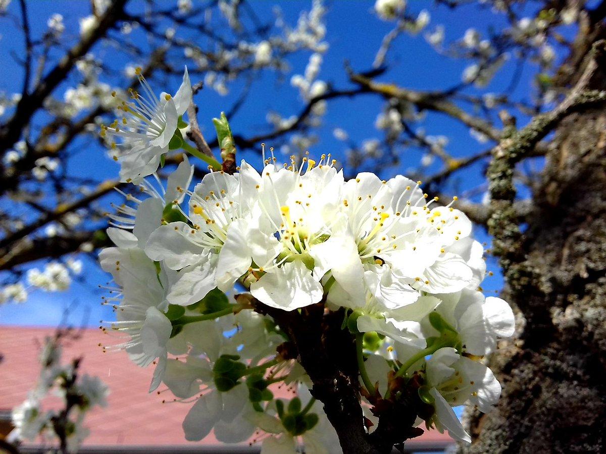 #Καλό_Μήνα #Καλή_βδομάδα_με_υγεία #Απρίλιος #Άνοιξη 😘🌺🌹❤
