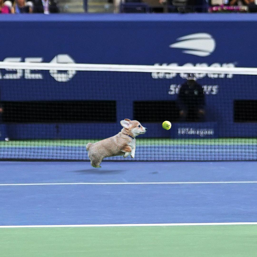 BREAKING: The US Open to add puppies to the ballperson team at the 2019 tournament for the first time.   All breeds welcome. https://t.co/Yu5ySEhriF