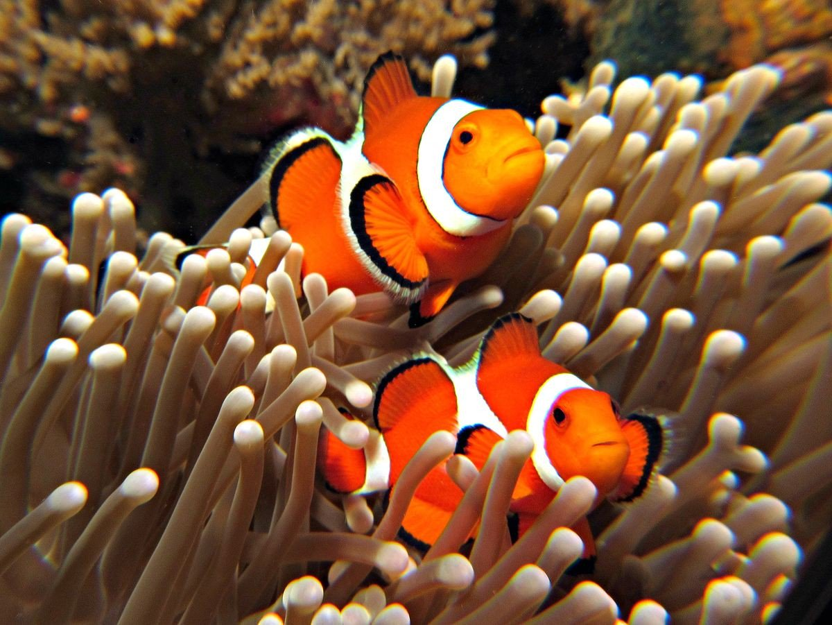 Красивые картинки с рыбками