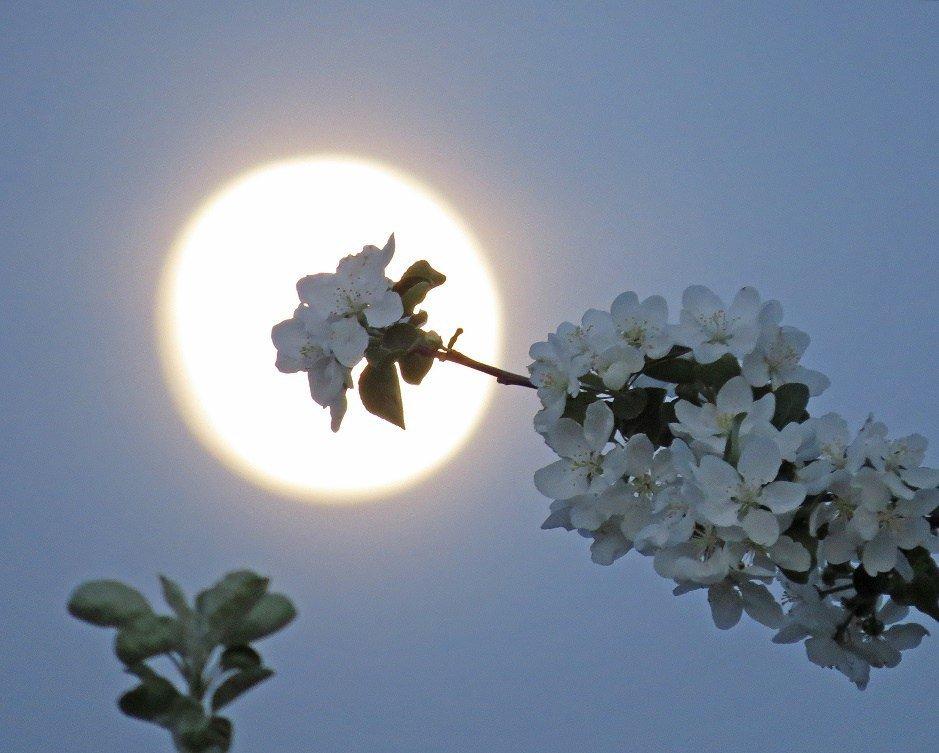 Весенняя луна картинки евгеньевна-замечательная женщина