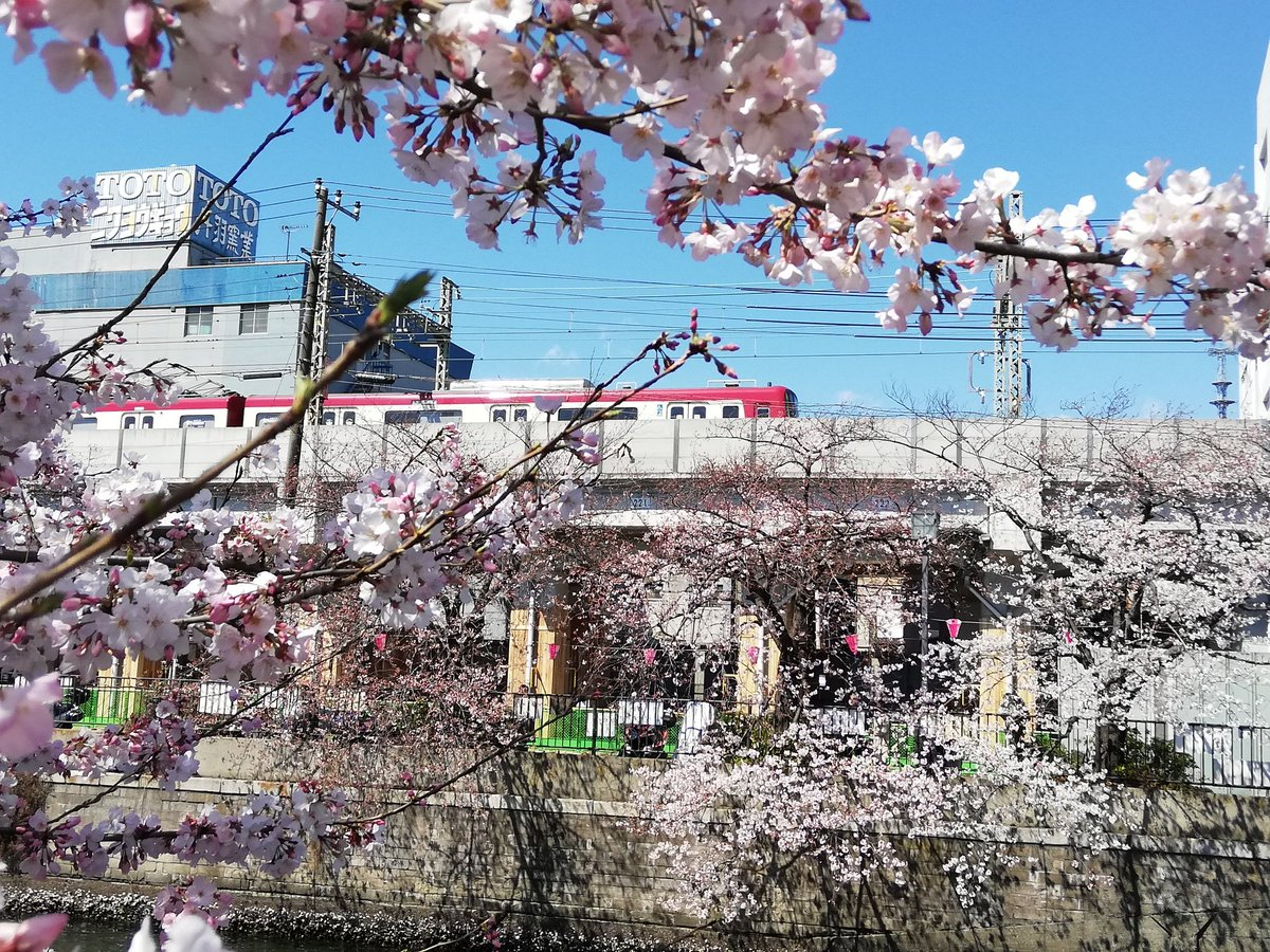 まつり 桜 大 岡川