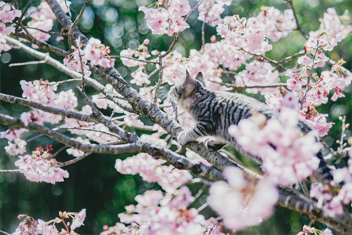 庭の桜がもう散り始めてるから撮ってたけど乱入された