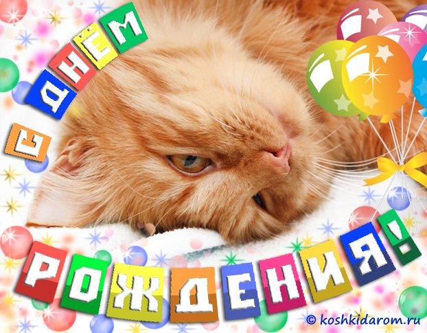 Августа, картинки с котами поздравления с днем рождения