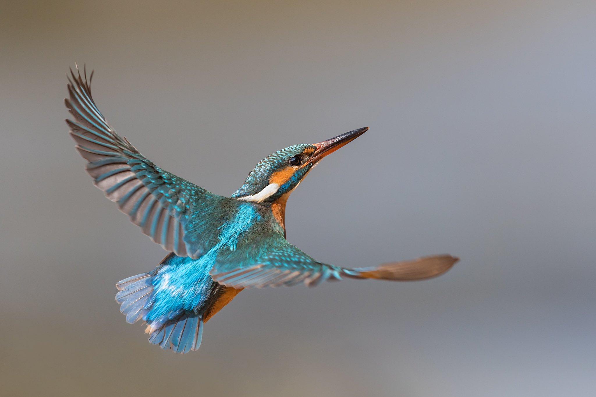 "EU Environment no Twitter: ""Happy anniversary to the Birds ..."
