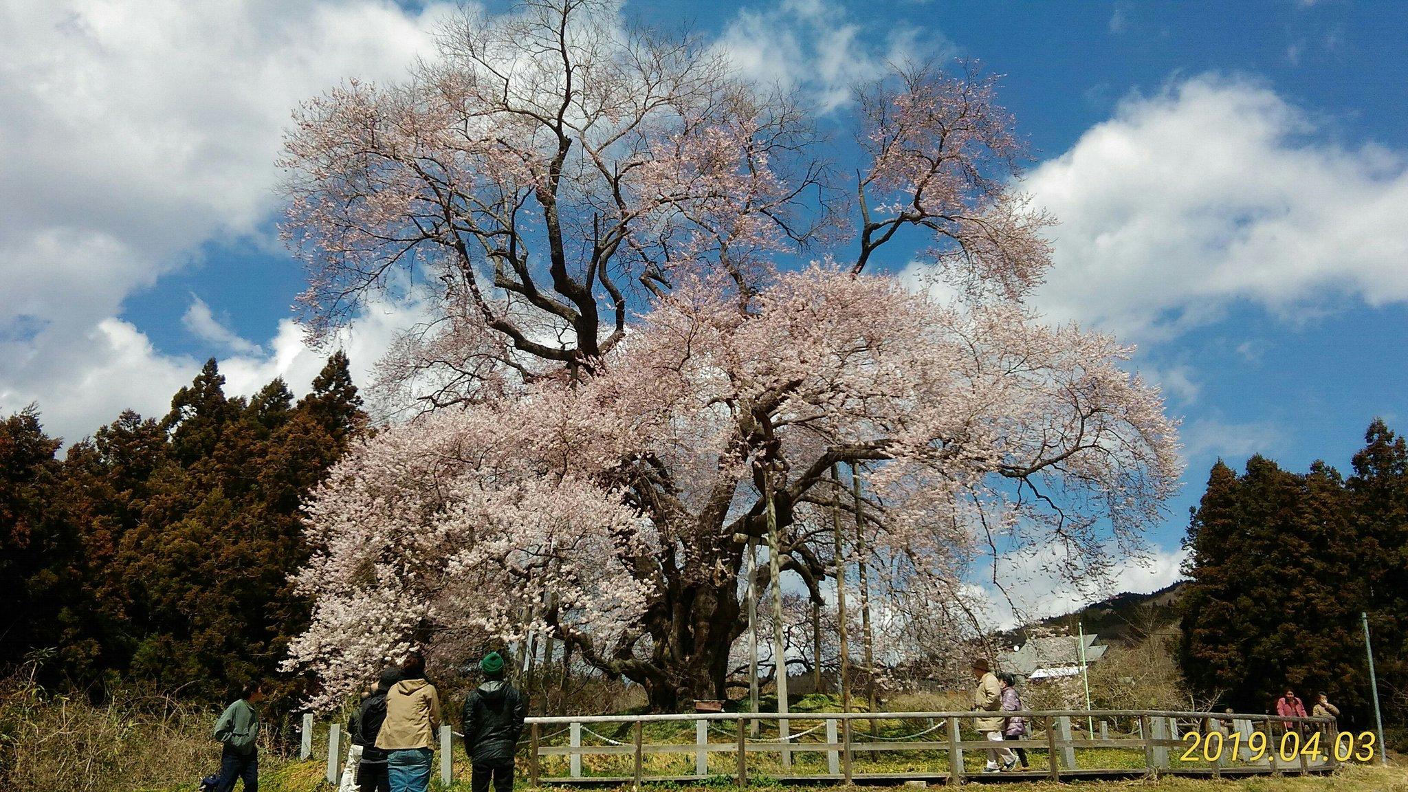 戸津辺の桜(2019/04/03)