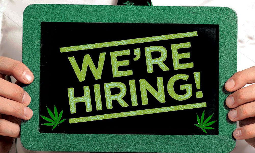 大麻公司招聘新职位 时薪高达50元还可以免费吸大麻