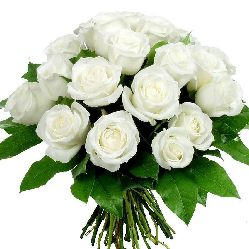 Руками, поздравительная открытка с днем рождения белые розы