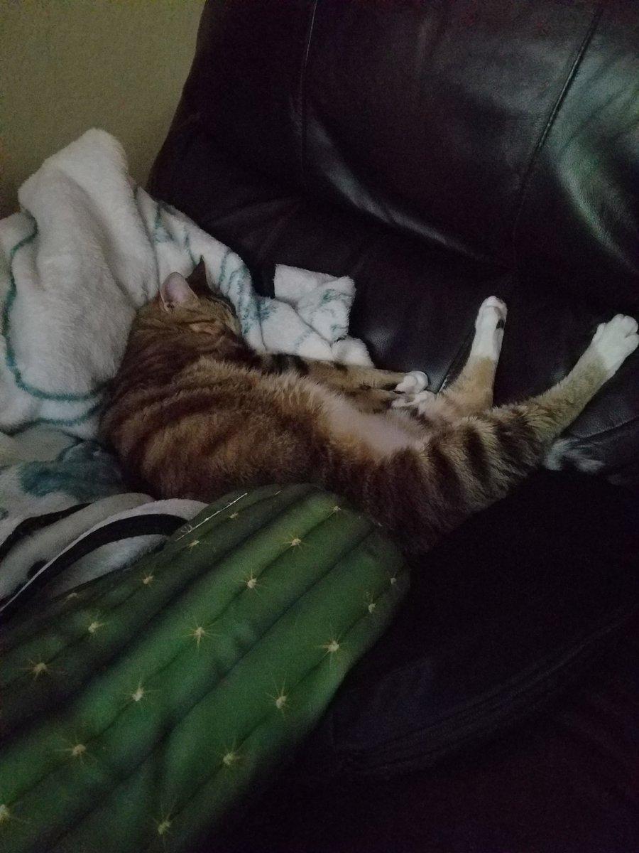 The sleeping Makus Maneuver!